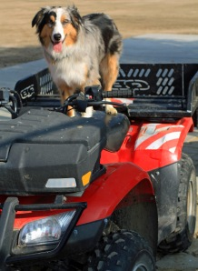 "Kai - ready and willing to go again... he loves ""his"" ATV!😊"
